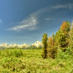 The Grand Tetons from a Meadow