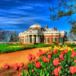 """Tulips at Monticello"""